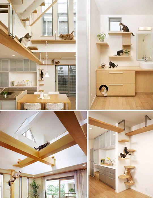Feline friendly house by Asahi Kasei @ apartmenttherapy.com