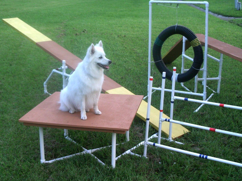 Popular Items For Agility Equipment On Etsy Dog Agility Dog
