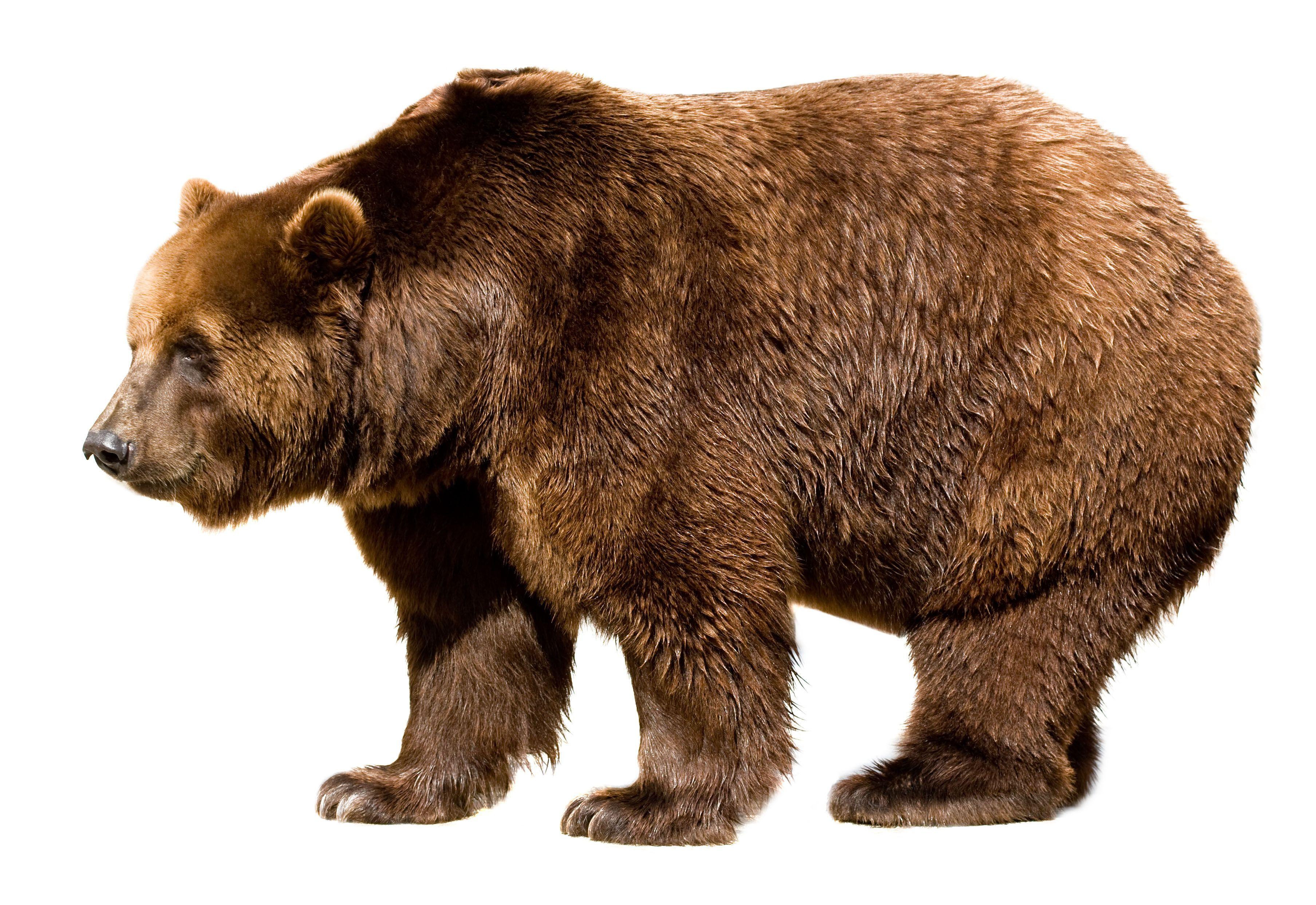 Картинка с медведицами-для детей