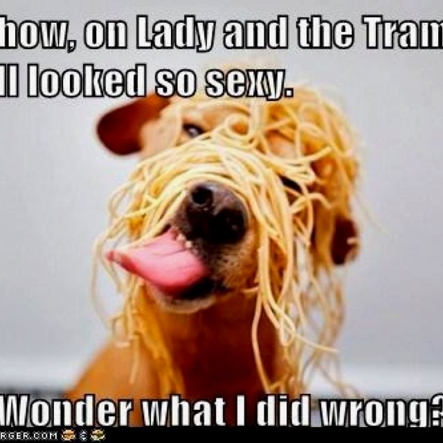 Spaghetti covered pup