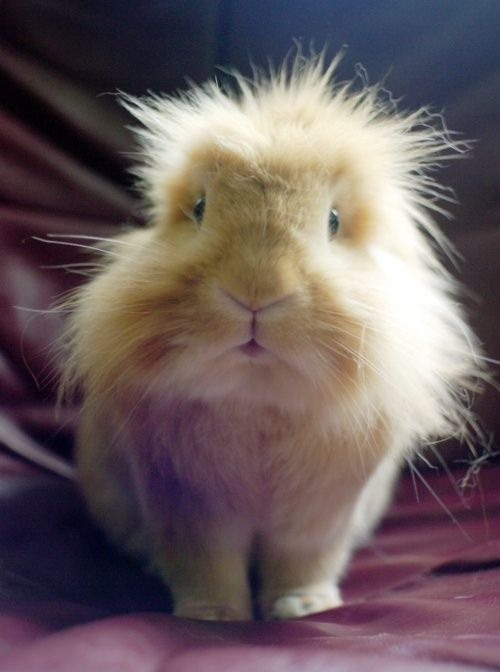 Bad hair day @Kim Kiwi