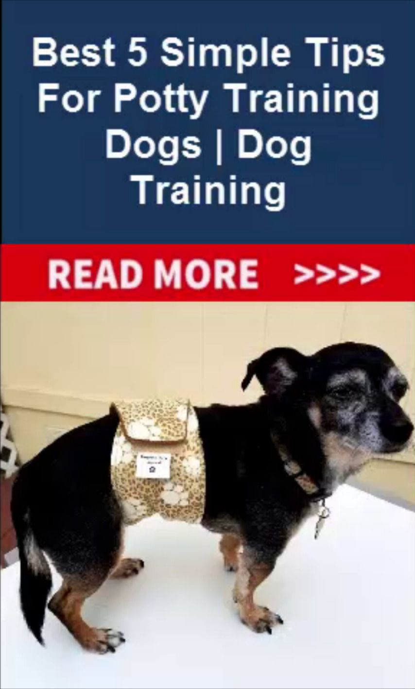 Best 5 Simple Tips For Potty Training Dogs Dog Training Dog