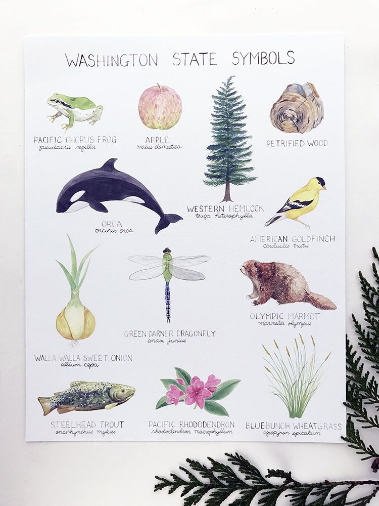 Washington State Symbols Art Print Poster Yardia Pinterest
