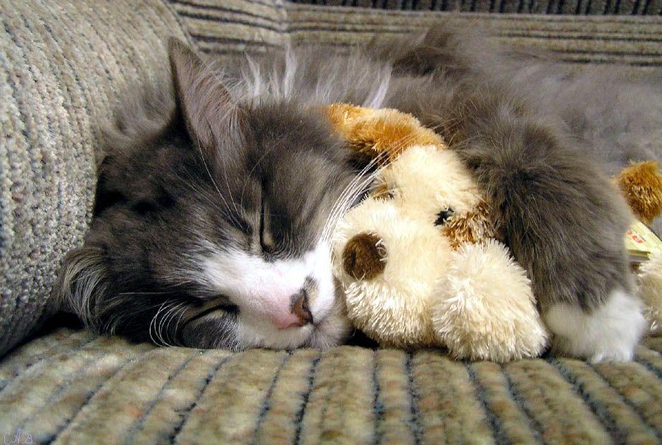 очень красивая милый спать пора фото открытки тому