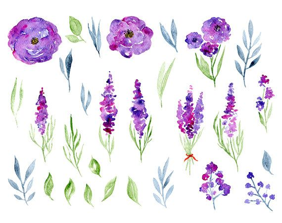 Watercolor Floral Clipart 29 Purple Violet Flowers Aquarelle