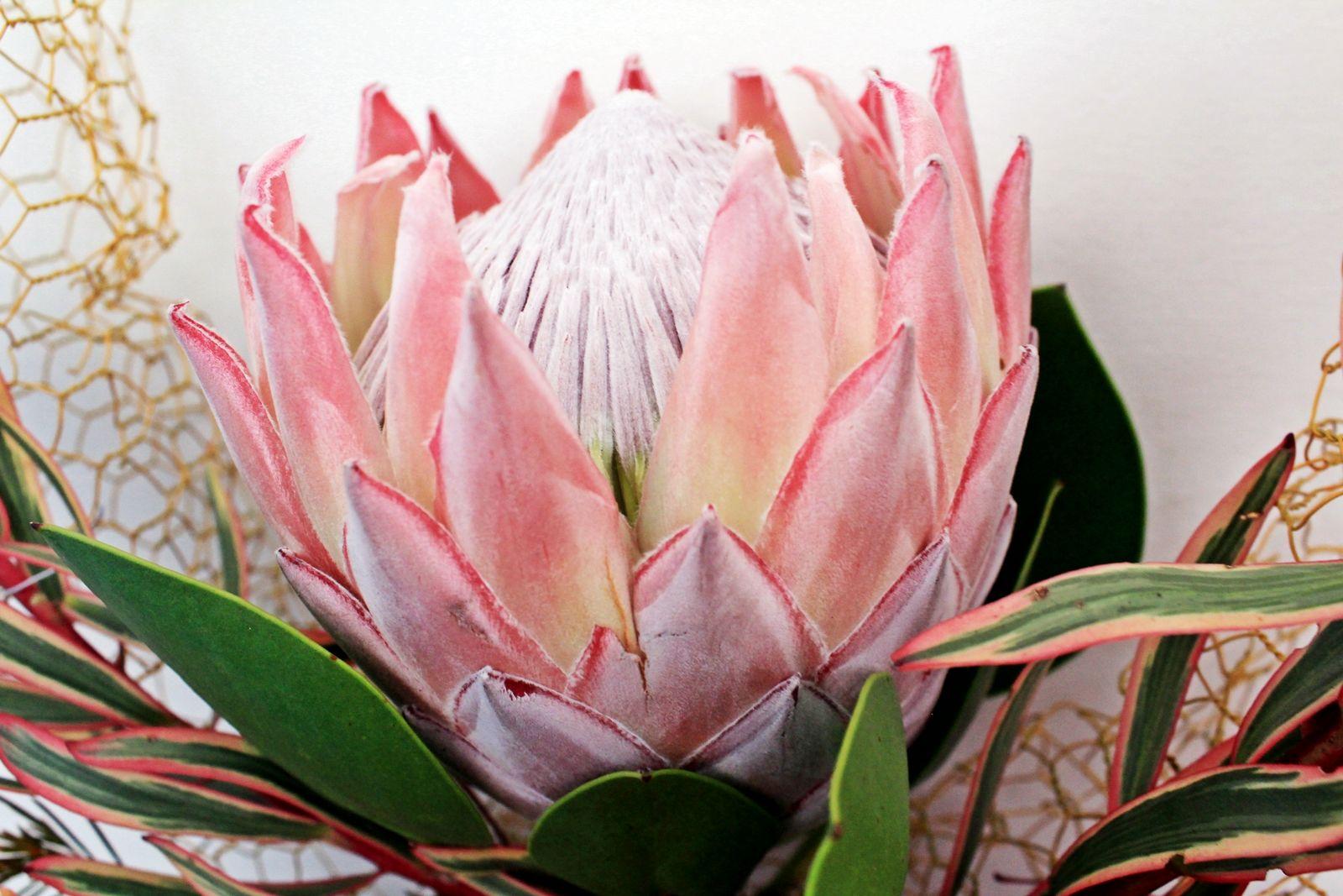 Protea Close Up Protea Flower Protea Art Flower Bouquet Painting