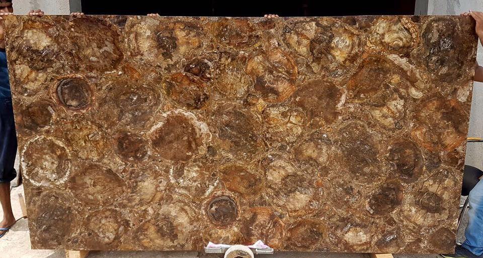 Petrified Wood Semiprecious Granite Countertops Kitchen Granite Kitchen Petrified Wood
