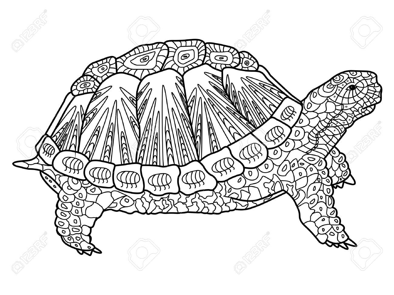 Stock Vector Turtle Coloring Pages Coloring Books Animal