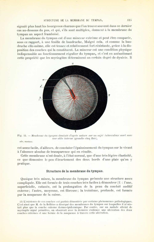 1897 Auditory system Tympanic membrane Human Anatomy Original ...