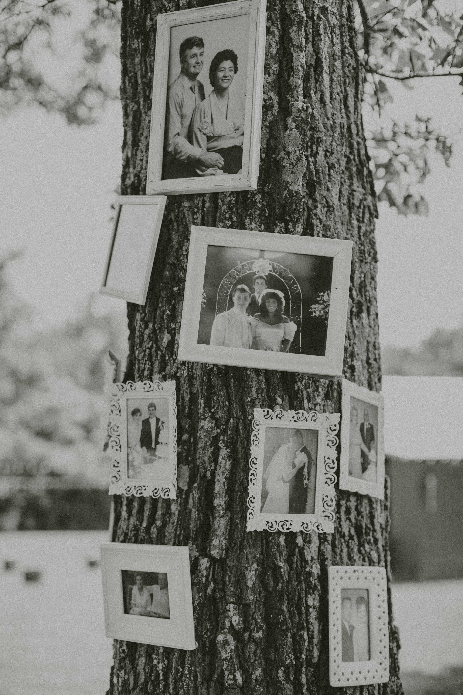 Family Photo Tree Trunk Display