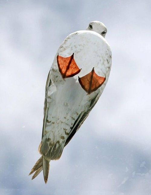 Seagull on a glass roof//