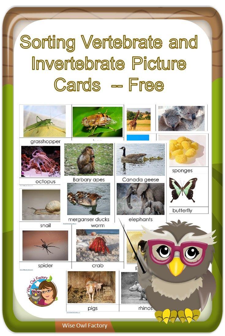 Workbooks vertebrates and invertebrates worksheets 5th grade : Invertebrates and Vertebrates Card Sort Free PDF   Pdf, Montessori ...