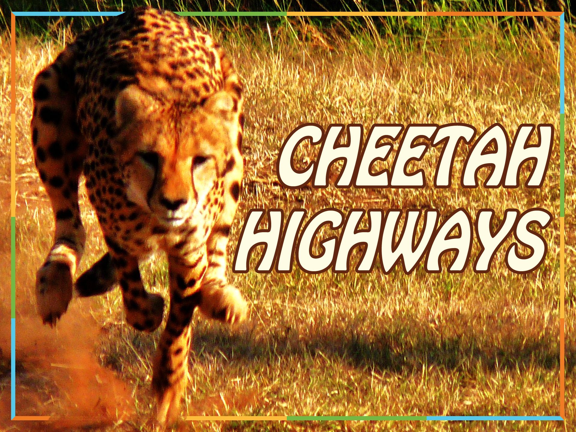 Chase Down Facts About Cheetahs With This Book About These Fast Cats Literacy Cat Facts Emergent Readers