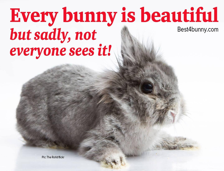 Every bunny is beautiful www.best20bunny.com   Cute baby bunnies ...