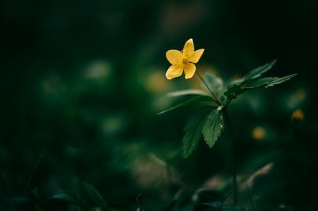 Yellow wildflower Photo by Thomas Zsebok — National Geographic Your Shot