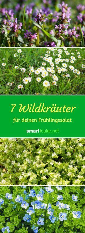 Photo of Estas 7 hierbas silvestres saludables para la ensalada de primavera crecen en casi todas partes