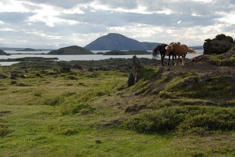 island landschaft pferde auf island reisef hrer. Black Bedroom Furniture Sets. Home Design Ideas