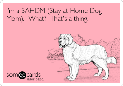 1ec03d85 I'm a SAHDM (Stay at Home Dog Mom). What? That's a thing. | Mom Ecard