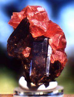 Dark reddish-pink Fluorite atop lustrous gemmy Smoky Quartz