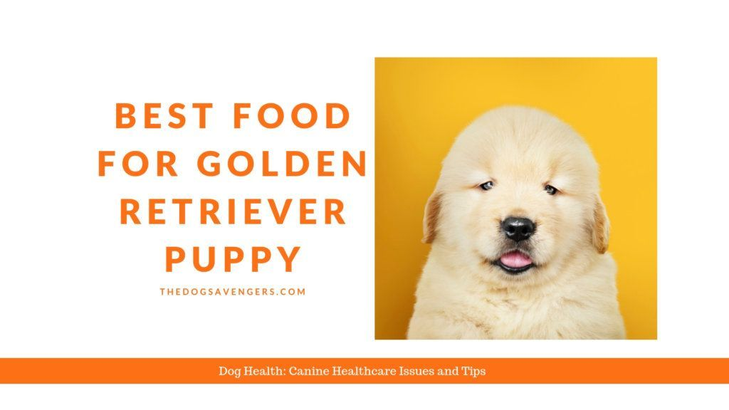 What Is The Best Food For Golden Retriever Puppy