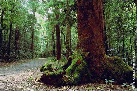 Rio de Janeiro - Floresta da Tijuca  Similar to WA forest.   That doesn't look like jungle.