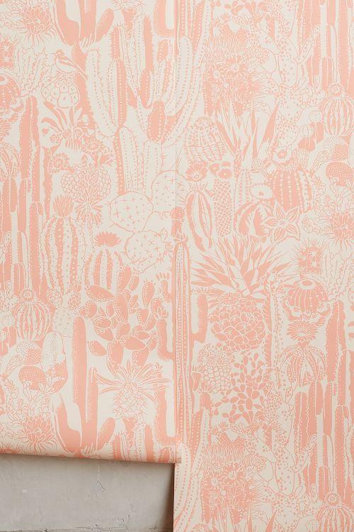 Cactus Spirit Wallpaper