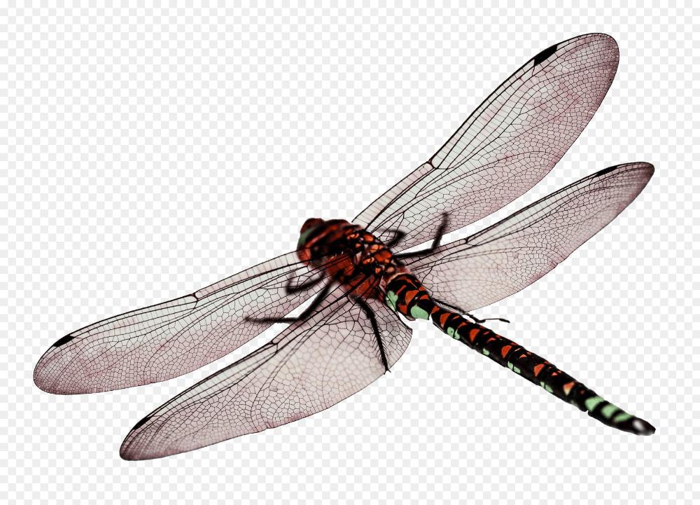 Dragonfly Png Dragonfly Png Transparent Image Pngpix 1739 1254 Png Download Free Transparent Background Dragonfly Png Wings Png Dragonfly Wings Dragonfly