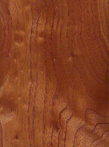 Australian Red Cedar Sealed Wood Sample