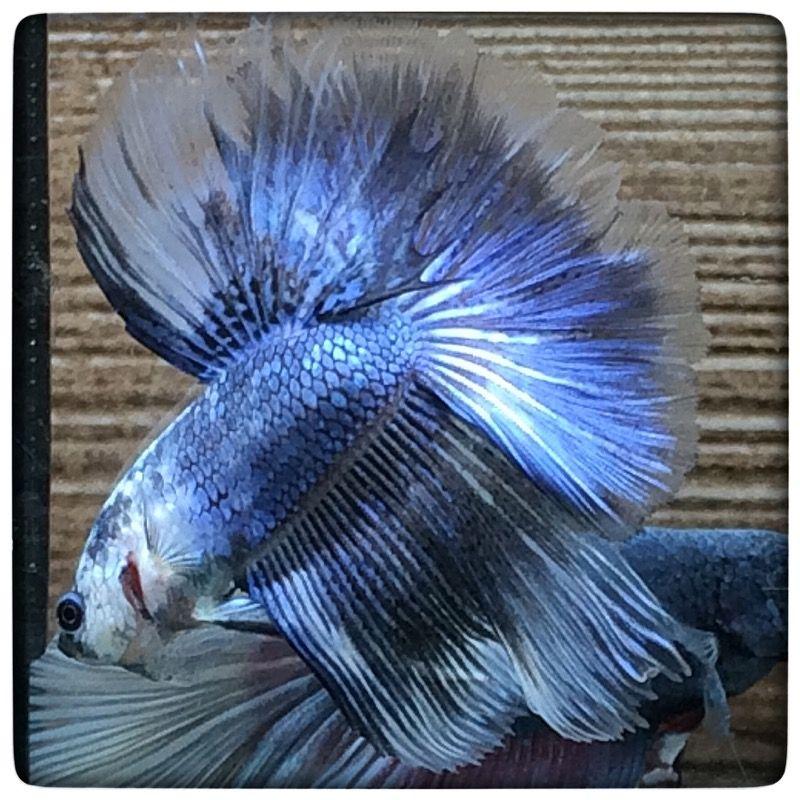 AquaBid.com - **Light blue HM 0189**