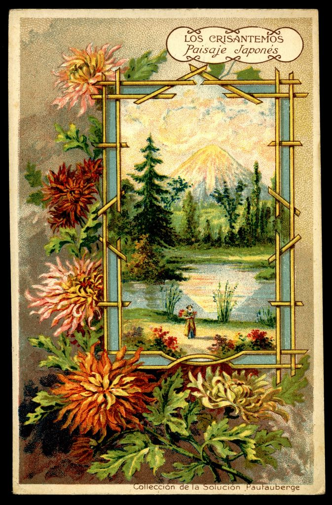 French/Spanish Tradecard. Chrysanthemums. Pautauberge Lung Solution. Flowers c1900.