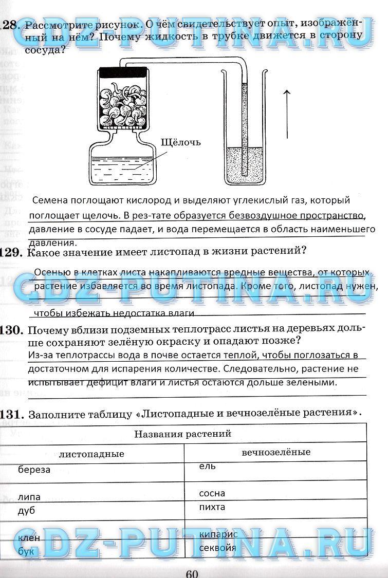 Скачать бесплатно и без регистрации решебник по русскому 4 класс бунеев