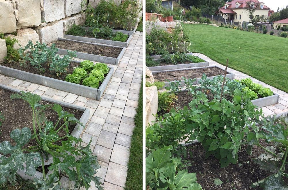 Gemusebeete Im Garten Anlegen Bepflanzen Pflegen Fashion Kitchen Garten Anlegen Garten Gemuse Anpflanzen