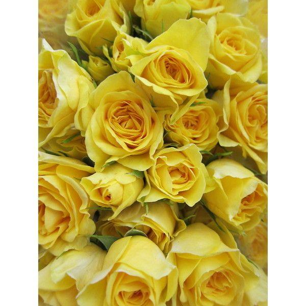 White and yellow flowers tumblr mightylinksfo