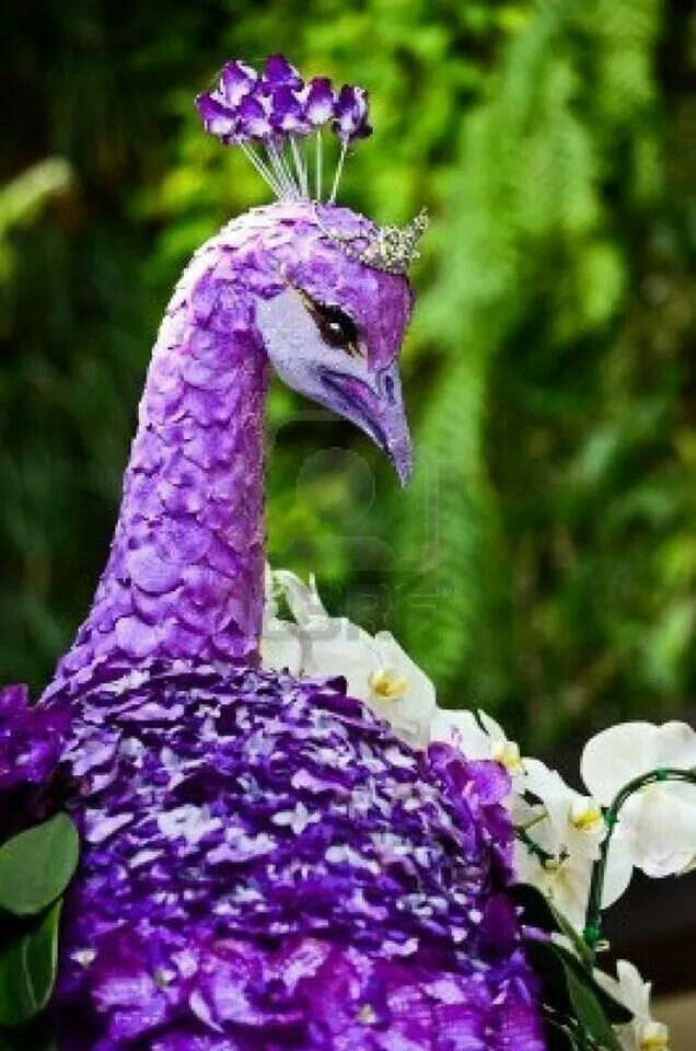 фото фиолетовых павлинов тебе яркий огонек