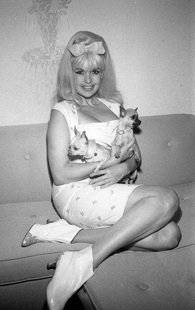 "Jayne Mansfield and her Chihuahuas. Perhaps the origin of the modern British slang for ""puppies."""