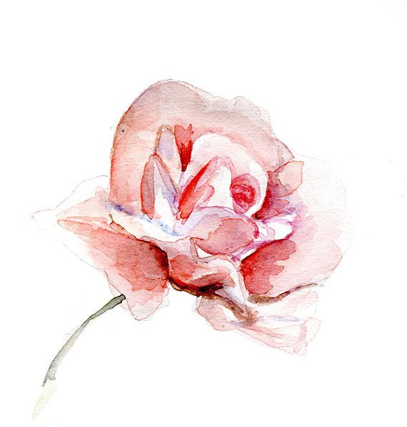 Giclee Art Print Of A Rose Watercolor Painting Pink Rose Aquarelle