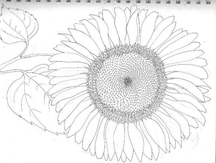 16 Gambar Bunga Matahari Hitam Putih Untuk Diwarnai Hal Ini Menunjukkan Mewarnai Menajdi Sebuah Sebuah Metode Yang Digunak Di 2020 Bunga Bunga Teratai Bunga Matahari