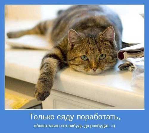 Картинки-приколы с надписями про работу | Я люблю кошек ...