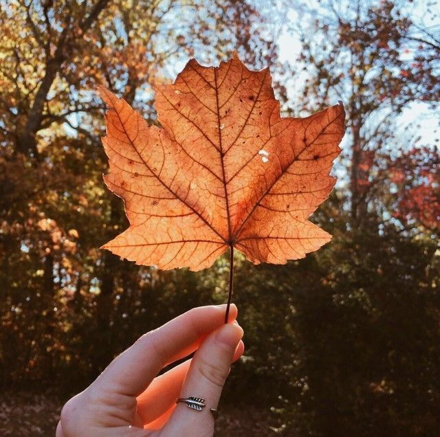 Autumng Asthetics: Autumn Photography, Autumn