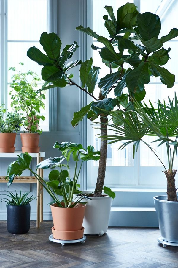 Bring the outdoors in this season! A few beautiful plants and plant pots will make it feel like summer in your home all year long.
