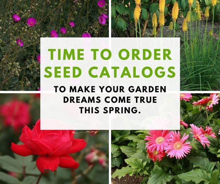 Spring is coming! Get ahead now and order your seeds to get plants