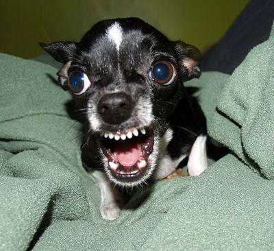 funny mean dog photo | hot dog | pinterest | crazy crazy, wild
