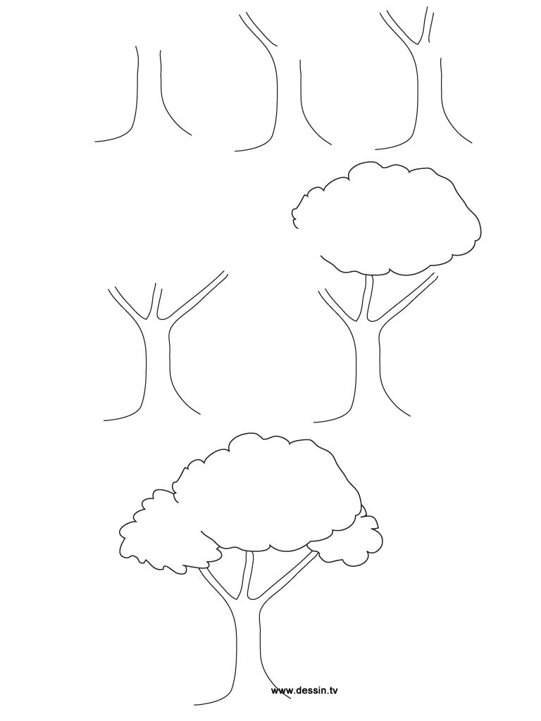 how to draw trees step by easy sketch coloring page tree