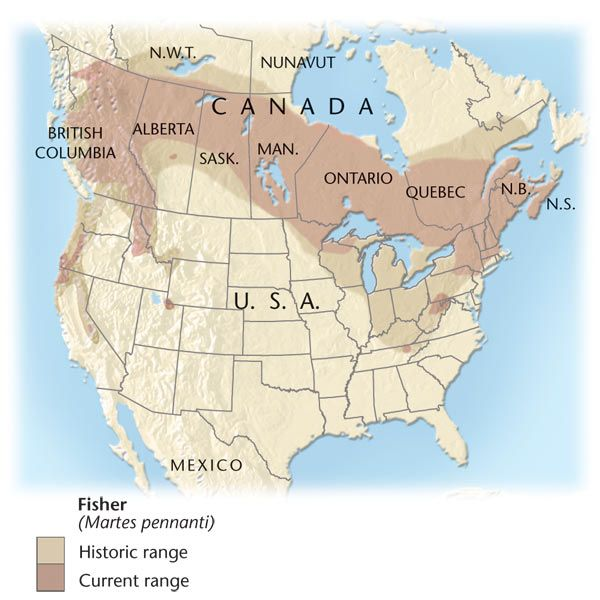 Range map for the Fisher Wildlife of BC Pinterest Fisher