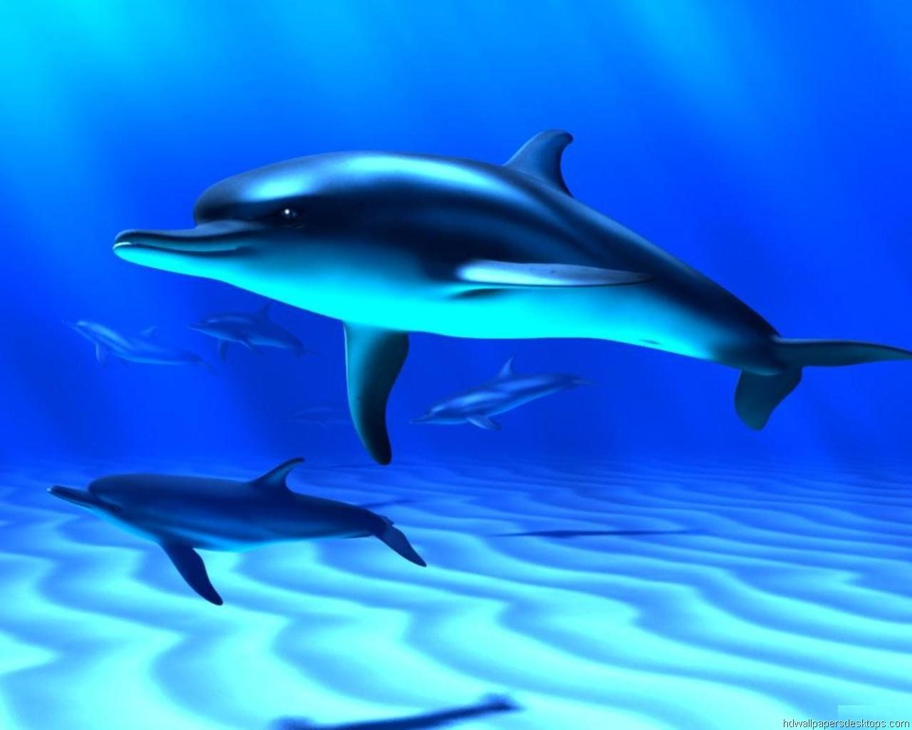 Bottlenose Dolphin Fish Wallpaper Fish Background Animal Wallpaper