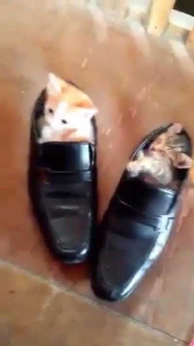 Photo of Buenas noches😴😴 #cats #kitten #kitty #cat #kittens #pets #love #cute #beautiful #pet #puppies #animal