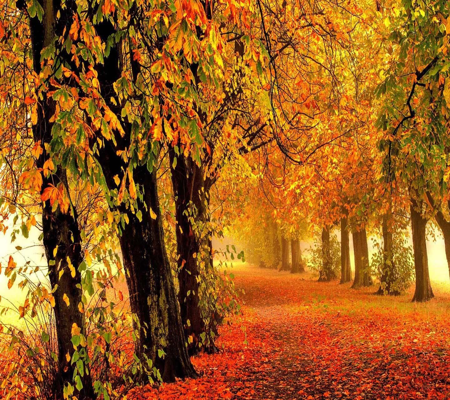 Download Nature autumn forest Wallpaper by _LuCkyman_ 78