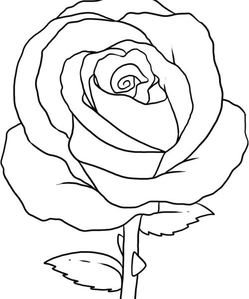 The Beautiful And Attractive Rose Coloring Page   Roses ...