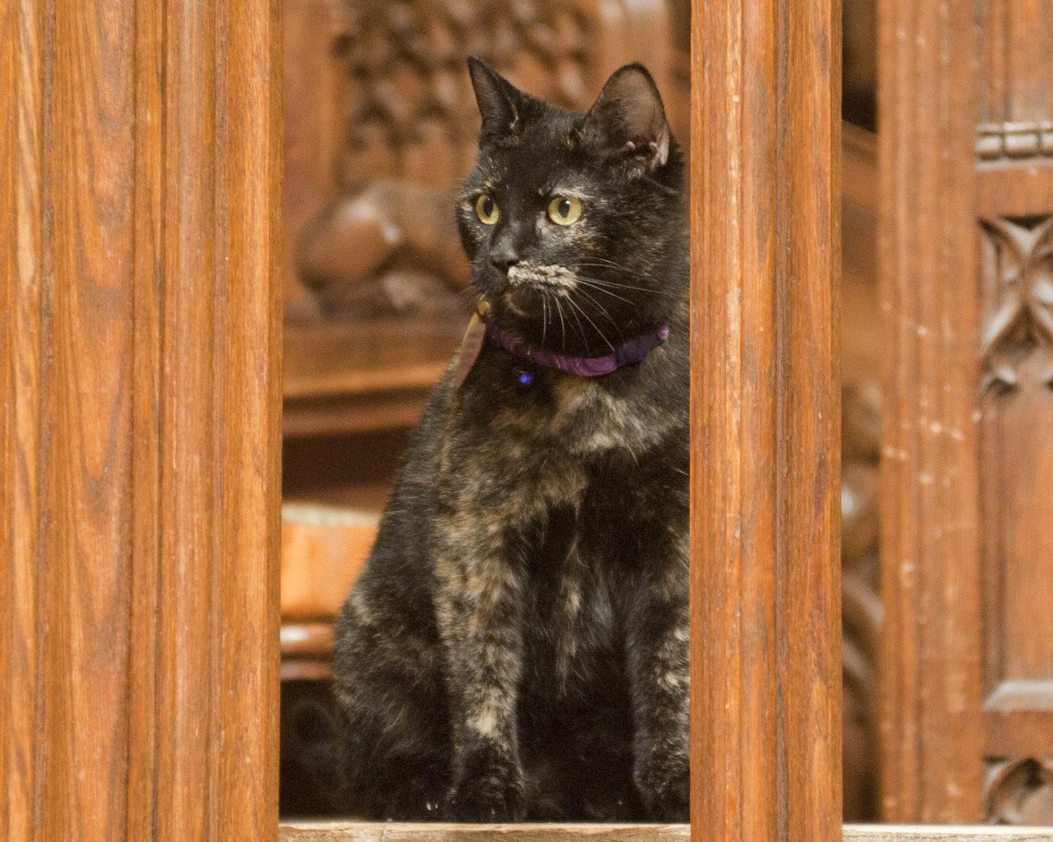 Carmina the Cathedral Cat Cats, Animals, Pets