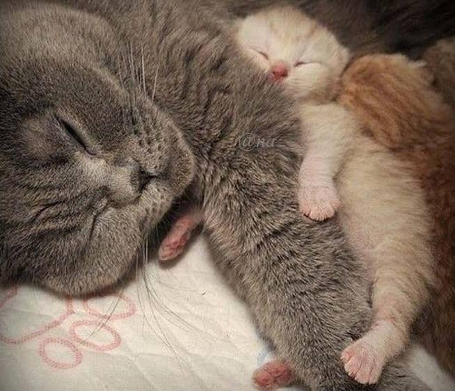 ╰☆ Buonanotte a-mici!!!
